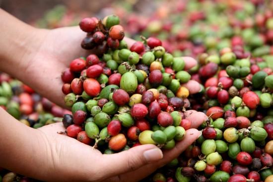 Las exportaciones de Nicaragua suben 11 % en primeros cincos meses de 2012