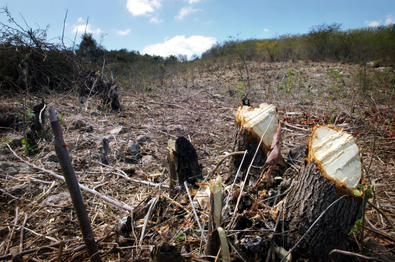 Profunda deforestación acelera vulnerabilidad de riesgos en Haití