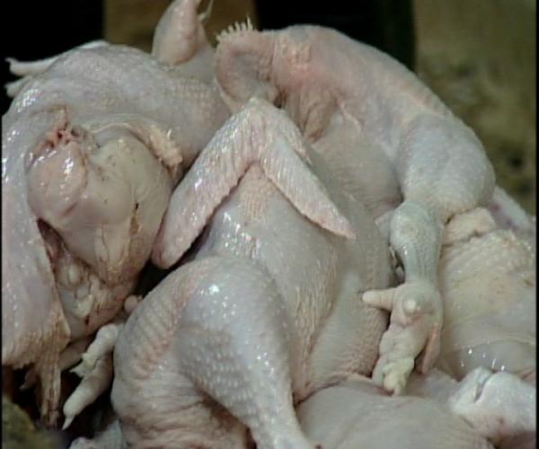 Productores de pollo van al Congreso Nacional ante desacuerdo con Pro Consumidor