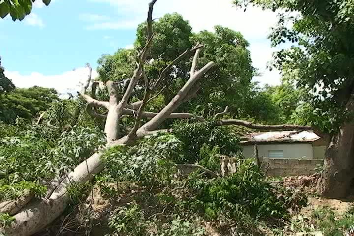 Hombre de 75 años muere al caerle encima un árbol