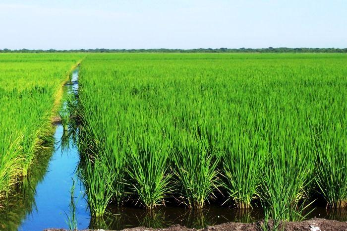 Se reducen las importaciones de cereales de Asia gracias a sus reservas