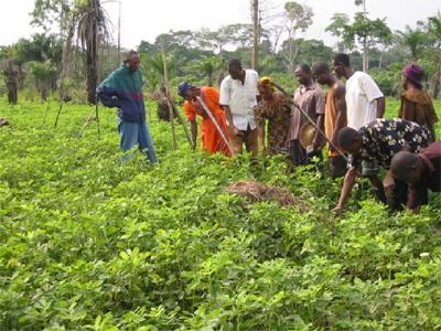 Técnicos agropecuarios presentarán propuesta de aumento salarial
