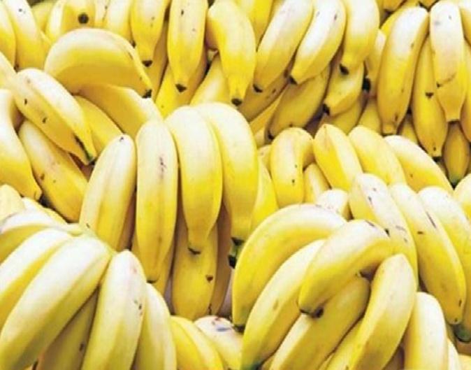 Costa Rica declara emergencia fitosanitaria por plagas que afectan al banano