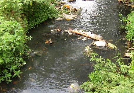 Mal manejo de aguas residuales pone en peligro vida de los seibanos