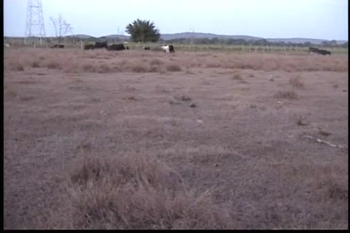Sequía afecta a ganaderos del Nordeste; piden al Gobierno ir en su auxilio