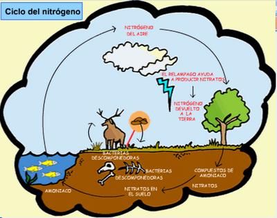 Ciclo del nitrógeno en América Latina agrava problemas ambientales