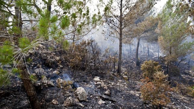 Incendio forestal afecta más de 50 tareas de tierra en Constanza