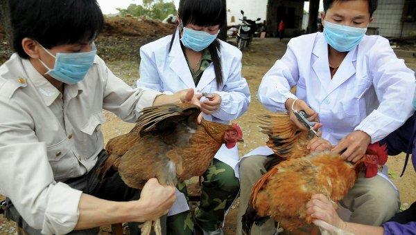 OMS dice que el H7N9 no se contagia entre humanos de momento