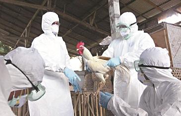Gripe aviar reaparece en Corea del Sur con un brote en un mercado de Seúl
