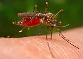 Desarrollan un dispositivo que detecta en 15 minutos la malaria
