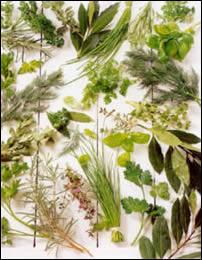 Los marroquíes prefieren curarse con hierbas