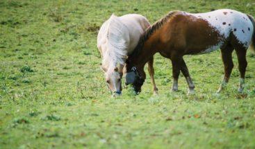 Carreteros despojados de sus caballos dicen autoridades se los quitan para venderlos