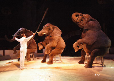 Panamá prohíbe circos y espectáculos con animales silvestres