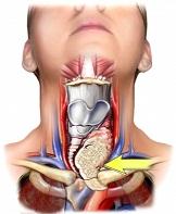 Alimentos ricos en yodo para mejorar la salud de la glándula tiroidea