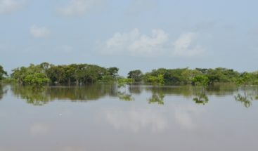 Más de 1,200 tareas de arroz anegadas en Las Guaranás