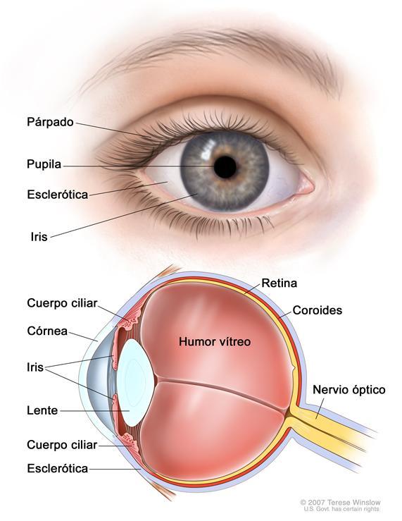 Destacan importancia de prevención para enfrentar el glaucoma