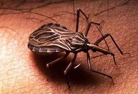 Nuevo estudio anuncia medicamento que promete cura para enfermedad parasitaria