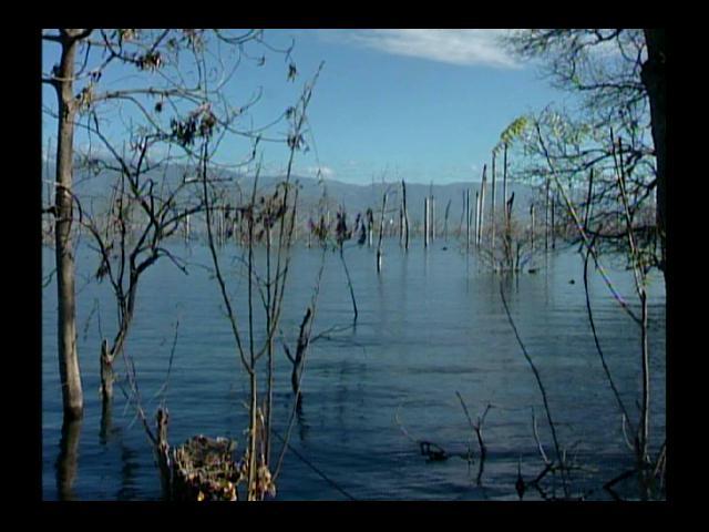 Crecida del Lago Enriquillo quebró la agropecuaria, según ganaderos
