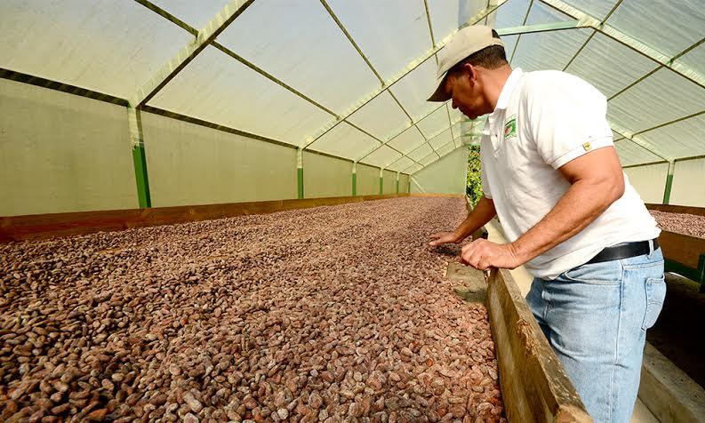 """""""Ahora se mueven los chelitos"""", afirman cacaocultores de Gaspar Hernández"""