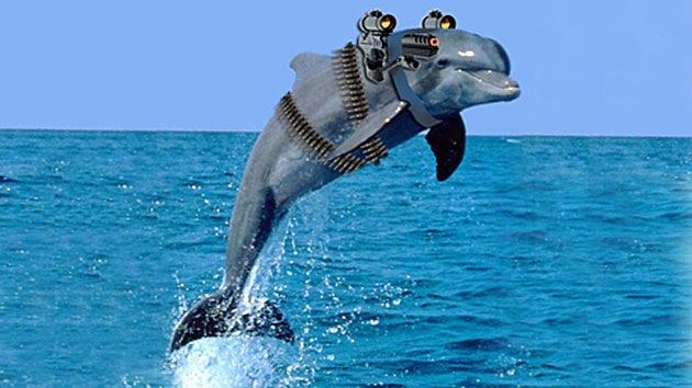 Los delfines de combate de Crimea pasan al servicio de la Armada rusa