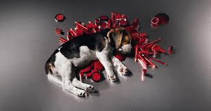 Se cumple un año sin cosméticos probados en animales en tiendas europeas