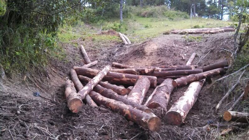 Denuncian tala de árboles en Constanza