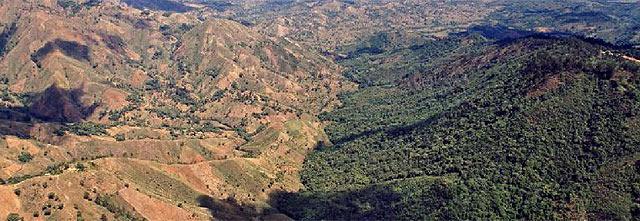 Sequía en Haití hace que aumente tala de árboles como medio de supervivencia