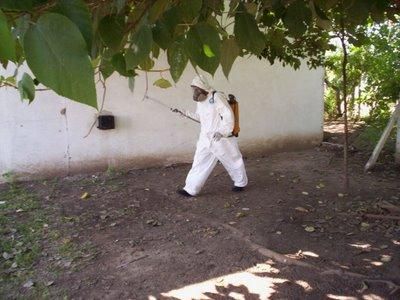 Fumigarán este fin de semana en Nigua y Haina al confirmase virus Chikungunya