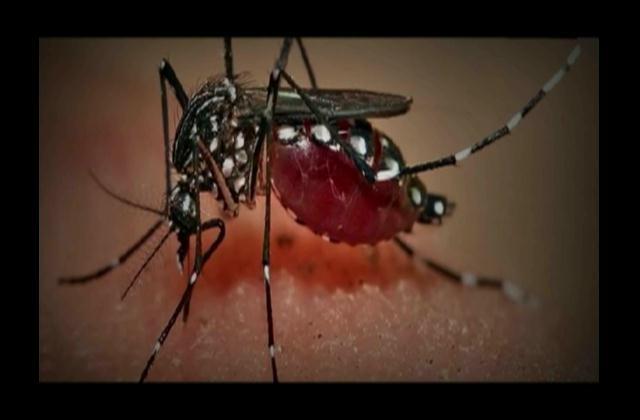 Fiebre chikungunya ahora amenaza a Centroamérica