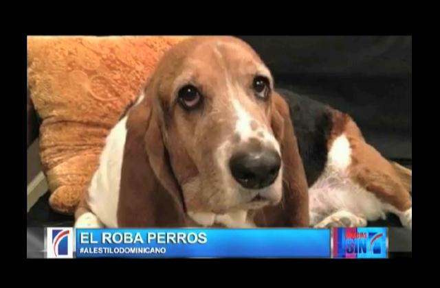Trompoloco habla de hombre es buscado por robar perros para luego venderlos
