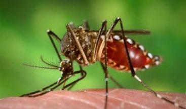 Sube a 10 la cifra de casos confirmados de chikungunya en Nicaragua