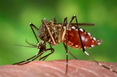 Guatemala reporta primeras muertes a causa del virus chikungunya