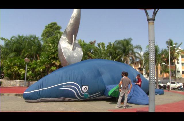 Realizan movilización pacífica para proteger ballenas de Samaná