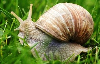 Los caracoles terrestres ya se consumían hace 30 mil años en España