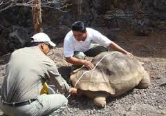 Muere tortuga gigante