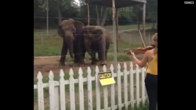 Hasta los elefantes bailan
