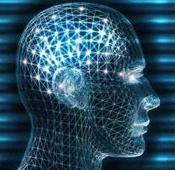 Descubren un sistema para 'subir' conocimiento al cerebro