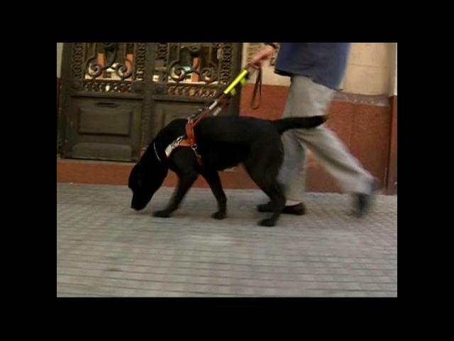 Perros guías ocuparán espacio en transporte público