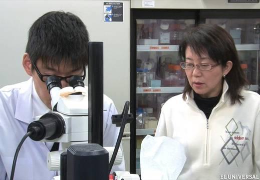 Realizan en Japón el primer trasplante en humanos con células iPS