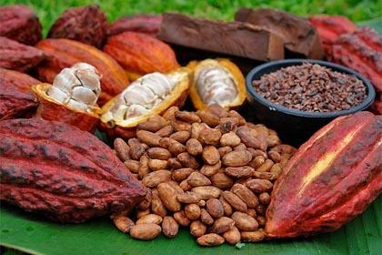 Marca italiana lanzará un chocolate con leche de burra y cacao criollo