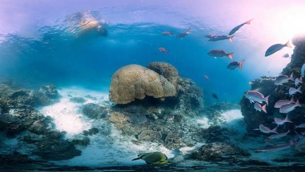 Hallan bacterias y virus en los océanos además de peces