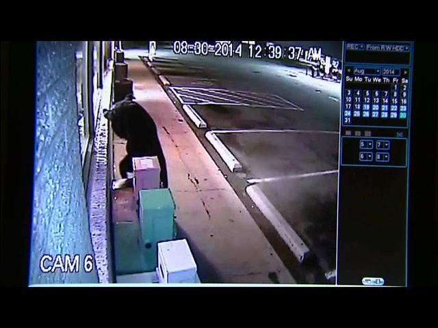 Cámaras de vigilancia captan oso vagando por las calles
