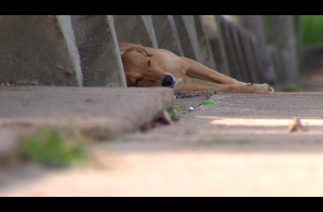 Denuncian matanza de perros en el Mirador Sur