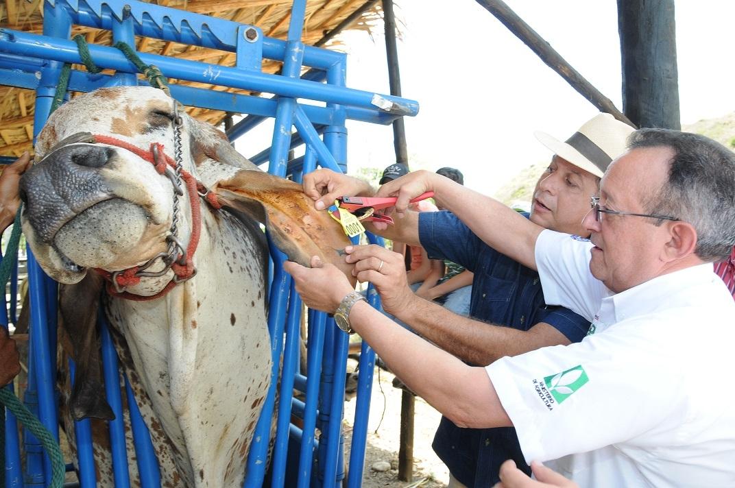 Agricultura afirma que el país está libre de la Peste Porcina Clásica