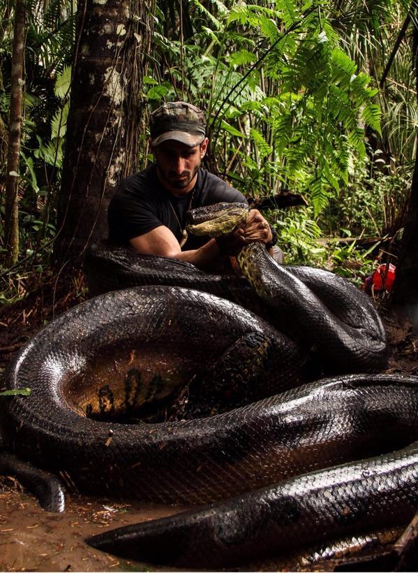 """¡Insólito! Hombre se prepara para ser """"tragado"""" por una anaconda"""