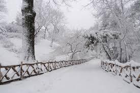 Rescatan a dos niños enterrados vivos bajo la nieve en Nueva York