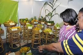 Anuncian séptima versión de Expo Monte Plata