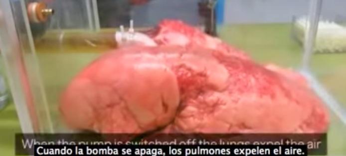 Experimento demuestra daño que fumadores ocasionan a sus pulmones