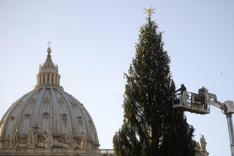 El árbol de Navidad ya fue colocado en la Plaza de San Pedro en el Vaticano