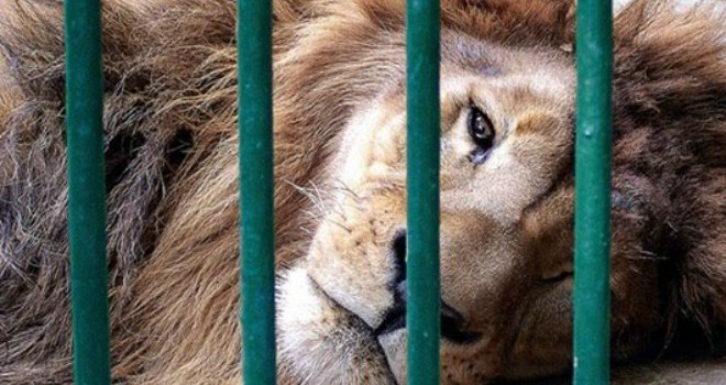 Un hombre herido tras entrar en recinto de leones en Zoo de Barcelona